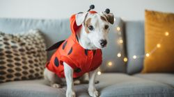 5 Dogs That Are More Howl-oween Ready Than