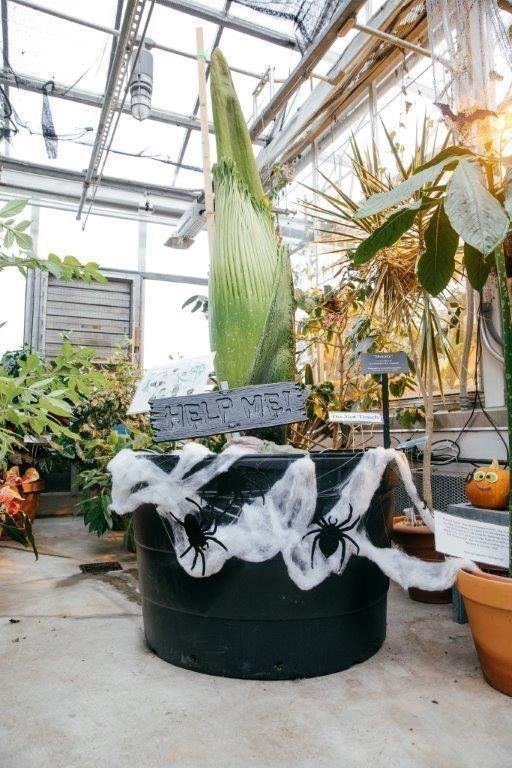 Corpse Flower Dartmouth