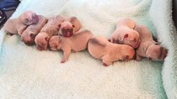 Six Puppies Stolen In Armed Manchester Raid Have