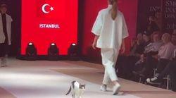 Βίντεο: Γάτα «εισέβαλε» σε επίδειξη μόδας και έκανε «κατάληψη» στην πασαρέλα, πειράζοντας τα