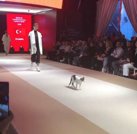 터키의 한 패션쇼 캣워크(catwalk)에 진짜 'cat'이