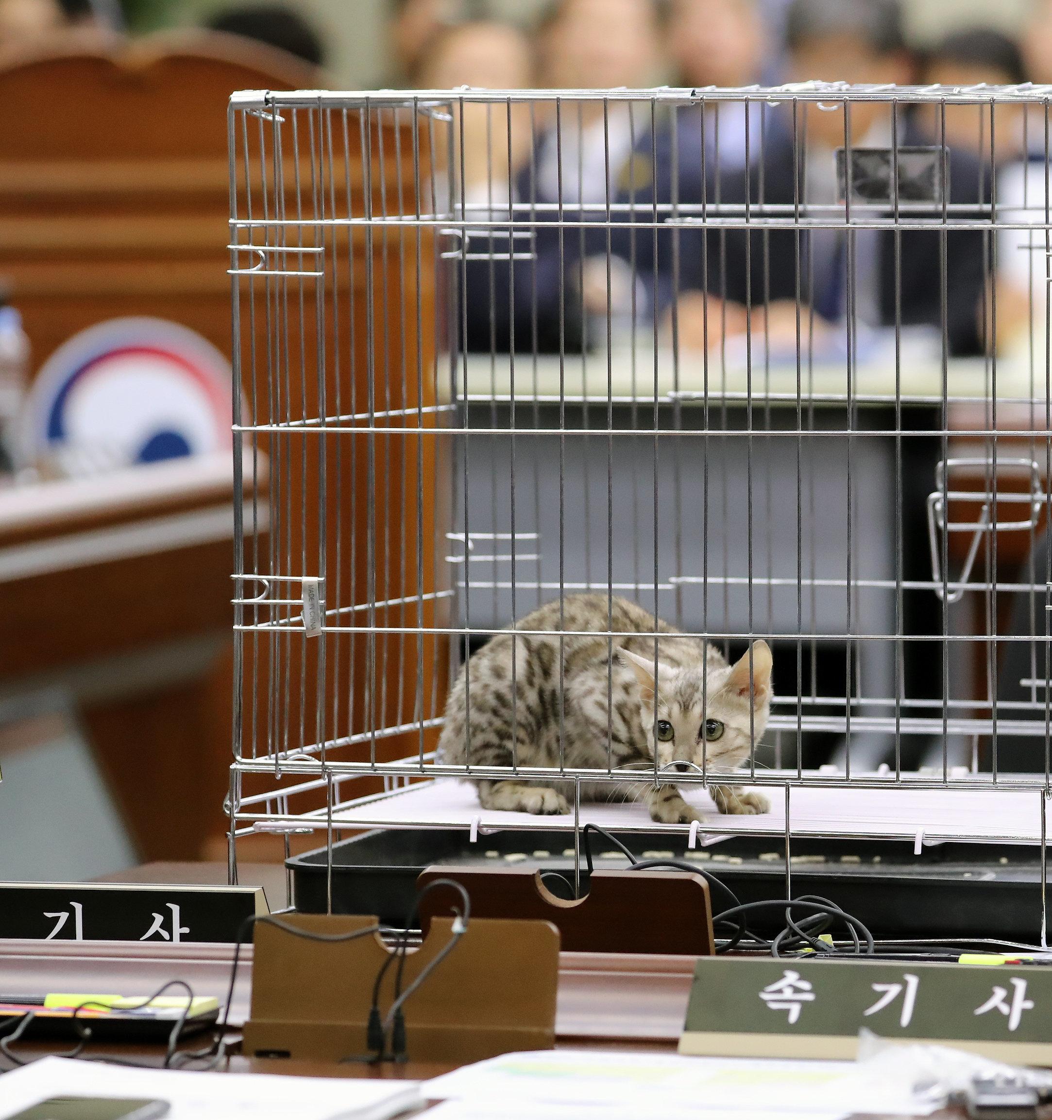 국감장에 '벵갈고양이' 못 들여오게 하는 법안이