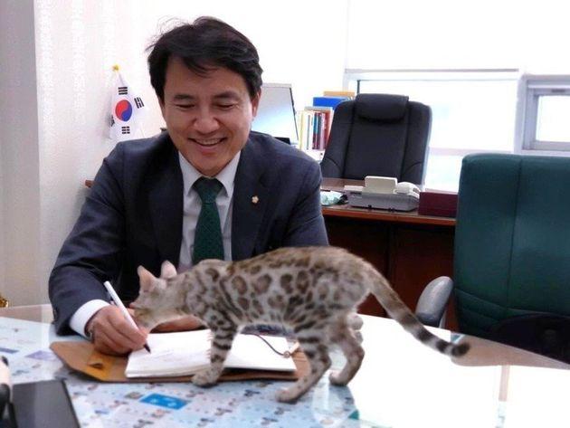 국회 국정감사에 데려온 아기 벵갈고양이의 행방을 묻는 여론이 이어지자, 김 의원은 자신의 페이스북에 고양이와 함께 있는 사진을