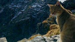 Tourist Finds Cat At 8000 Ft.