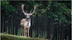 WWF: Ο πλανήτης μας έχασε το 60% του πληθυσμού των άγριων ζώων σε διάστημα 40