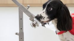 Yet Another Reason Why Dogs Are Great – They Can Sniff Out