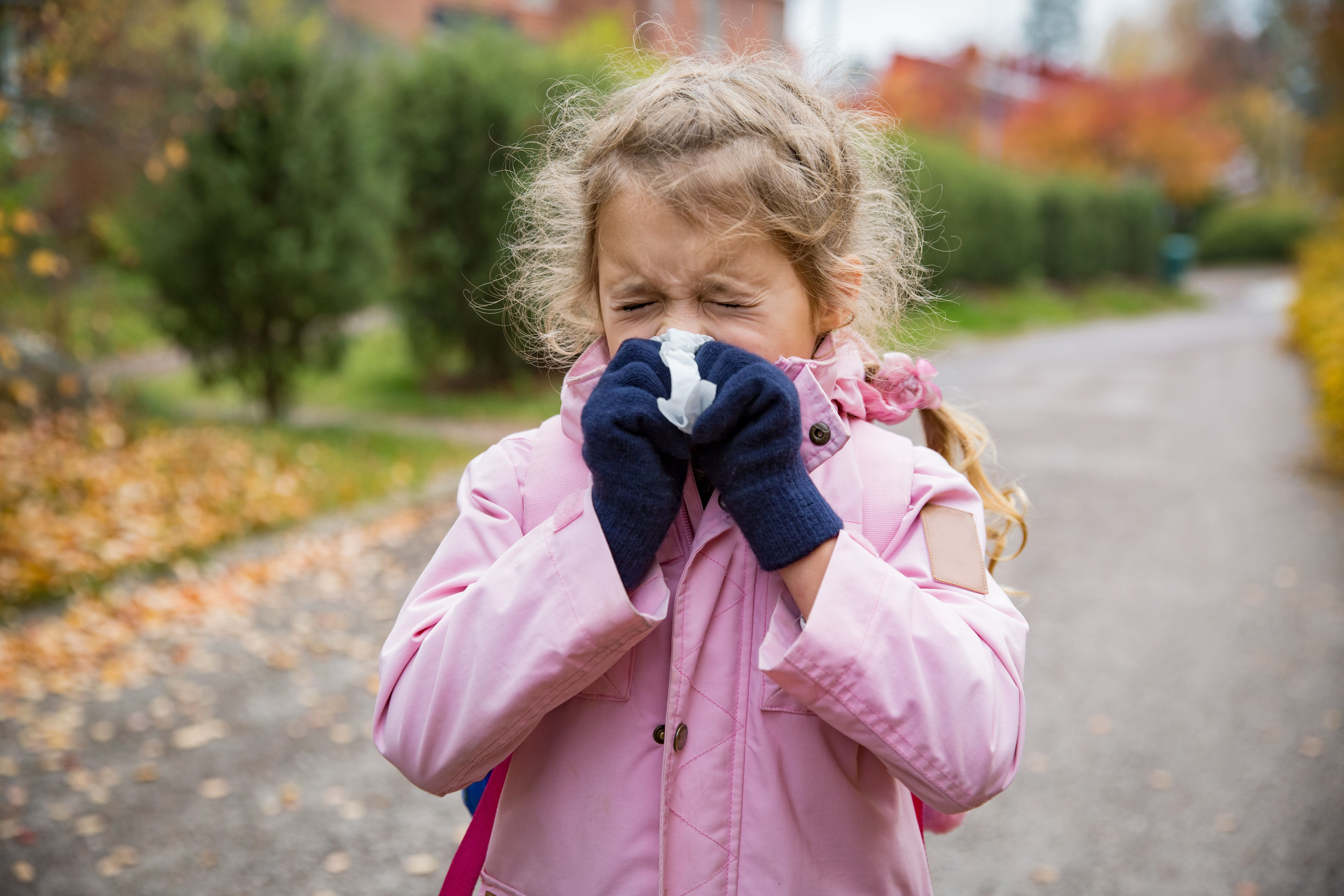 Sick little girl with cold and flu standing outdoors. Preschooler sneezing, wiping nose with handkerchief, coughing, having runny red nose. Autumn street background