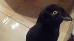 Πιστεύετε ότι η φωτογραφία δείχνει ένα κοράκι; Η νέα σπαζοκεφαλιά που έχει μπερδέψει το ίντερνετ