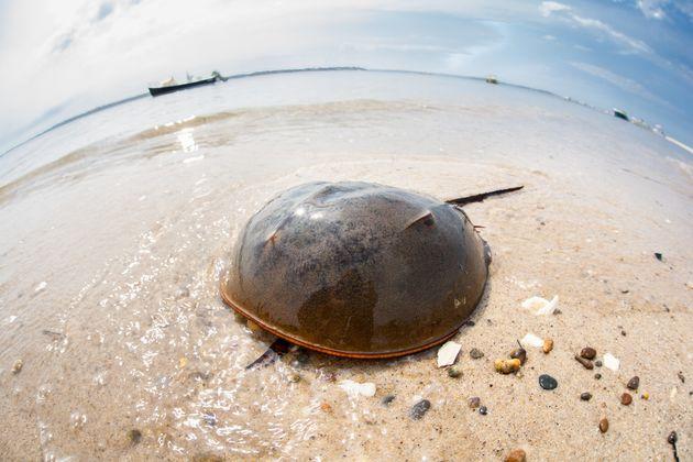 Οι ωκεανοί φλέγονται: Η κλιματική αλλαγή κάτω από τα