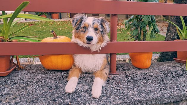 Planning To Dress Up Your Pet For Halloween? Here's Why You Should Think