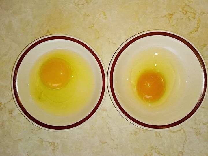 The egg on the left is from a hen that was fed only commercial feed. The egg on the right is from a hen that's been to pasture and fed Amanda Nolan's fruit-and-vegetable mash for seven days.