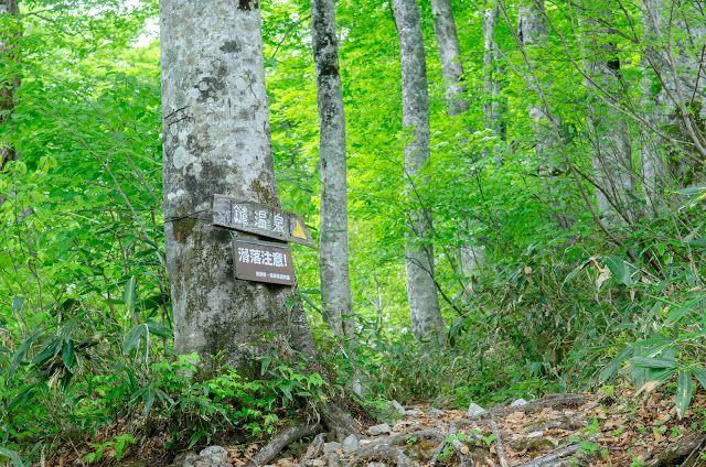 Πώς ένα μήνυμα σε δέντρο έσωσε 3 κοπέλες που χάθηκαν στις Άλπεις