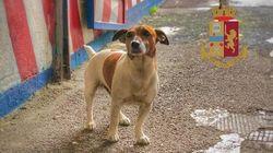 Μαφιόζικο συμβόλαιο θανάτου για το σκυλάκι που τους