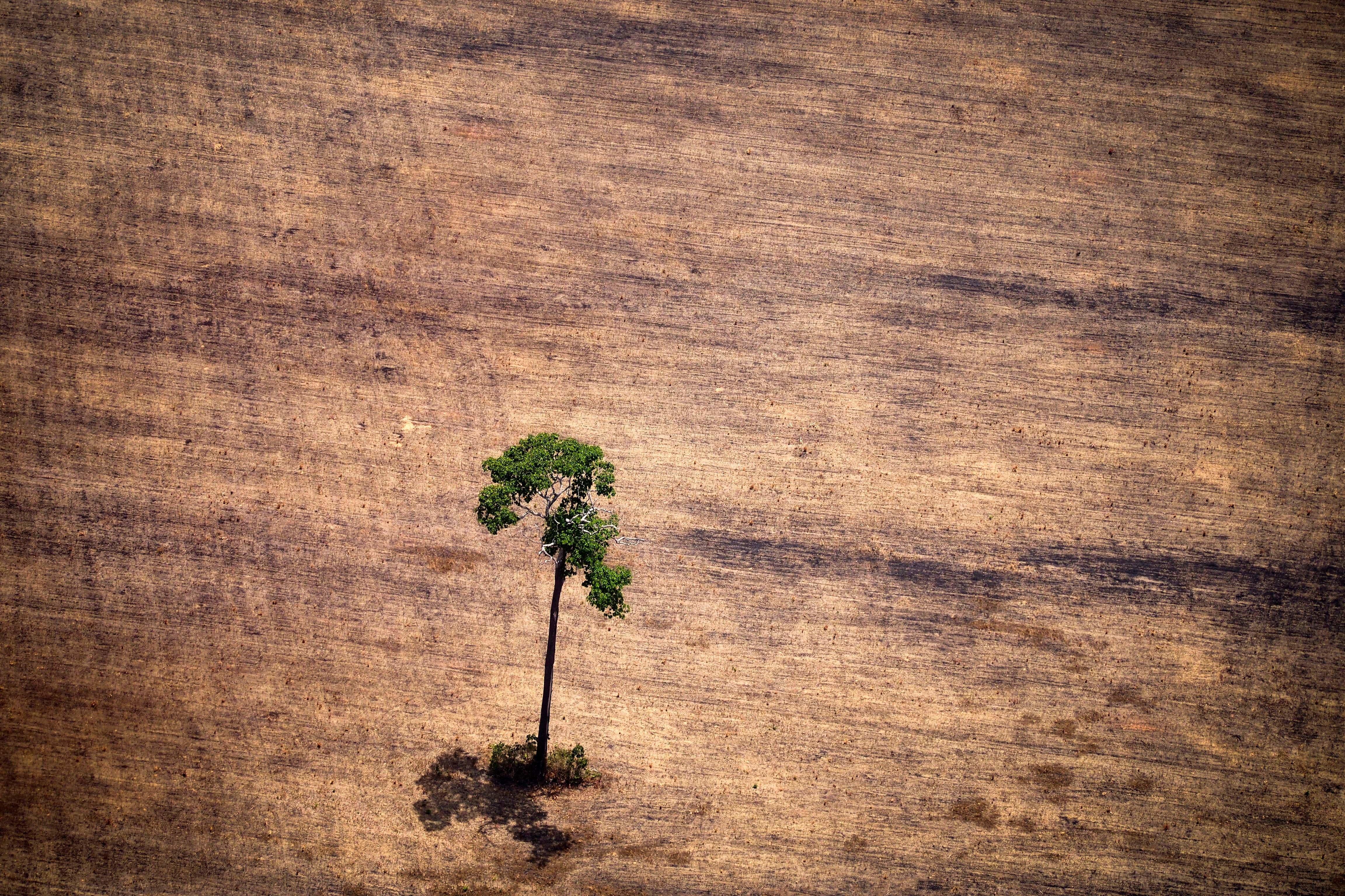 Άμεση απειλή το δάσος του Αμαζονίου οι αποφάσεις του προέδρου της Βραζιλίας και οι δεσμοί με ισχυρά