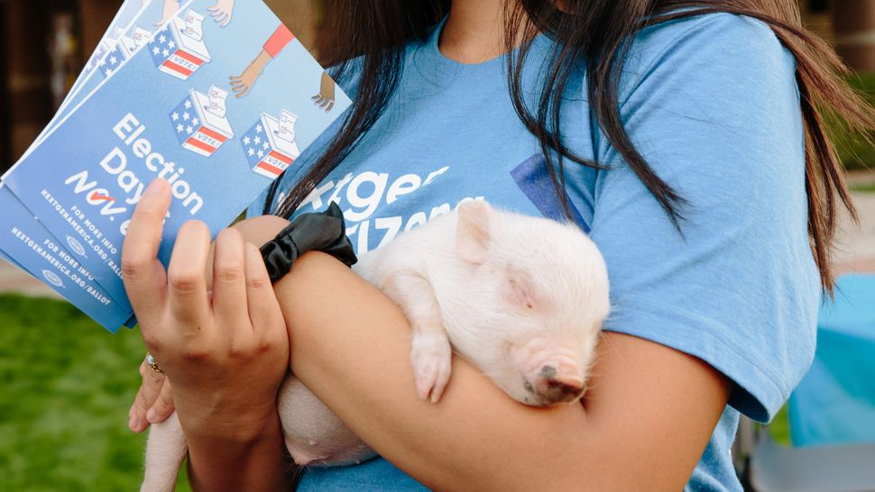 Ephraim Infante, an organizer with NextGen, holds a month-old Vietnamese pot-bellied pig at the Votes and Goats event at Ariz
