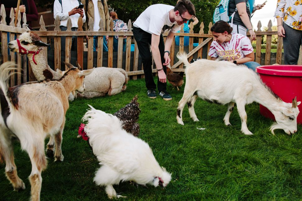 Students interact with farm animals at the Votes and Goats petting zoo and get-out-the-vote event.