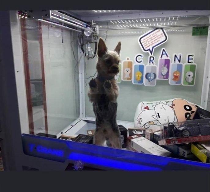 '인형뽑기 기계 안에 갇힌 강아지' 동물학대 여부에 대한 경찰의