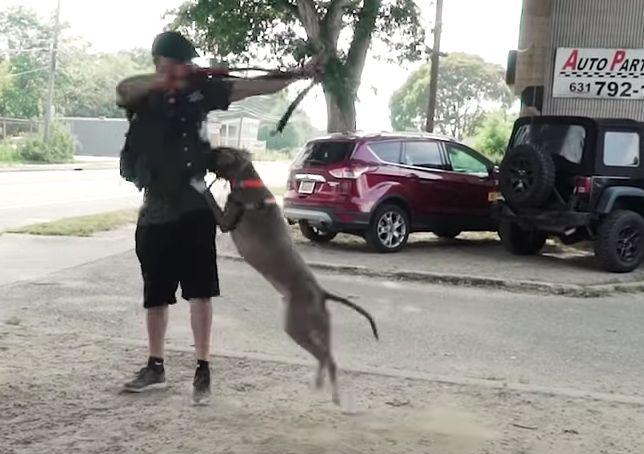 Aggressiver Kampfhund fällt Männer an – eine Woche später ist er nicht mehr