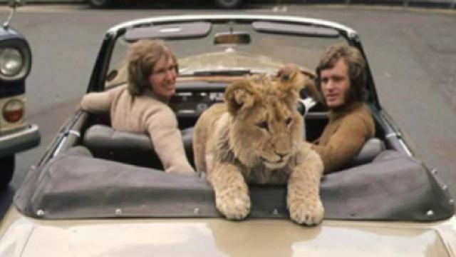Τον αγόρασαν στα Harrods, τον άφησαν στη ζούγκλα, τους αγάπησε για πάντα
