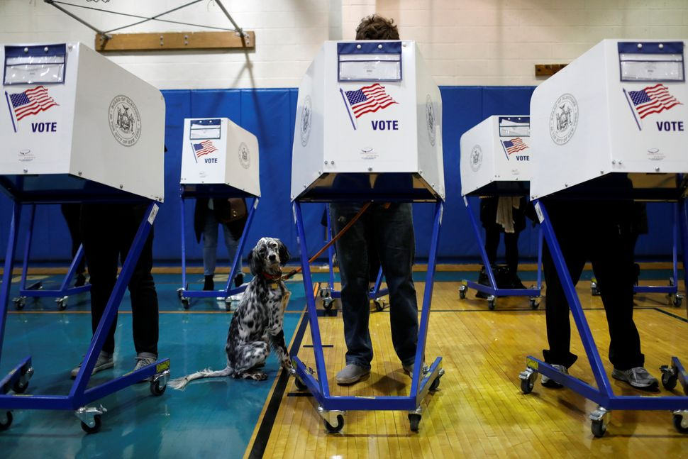 Field, a 1-year-old English Setter, waits as his owner votes at P.S. 20 during the midterm election in Manhattan in New York