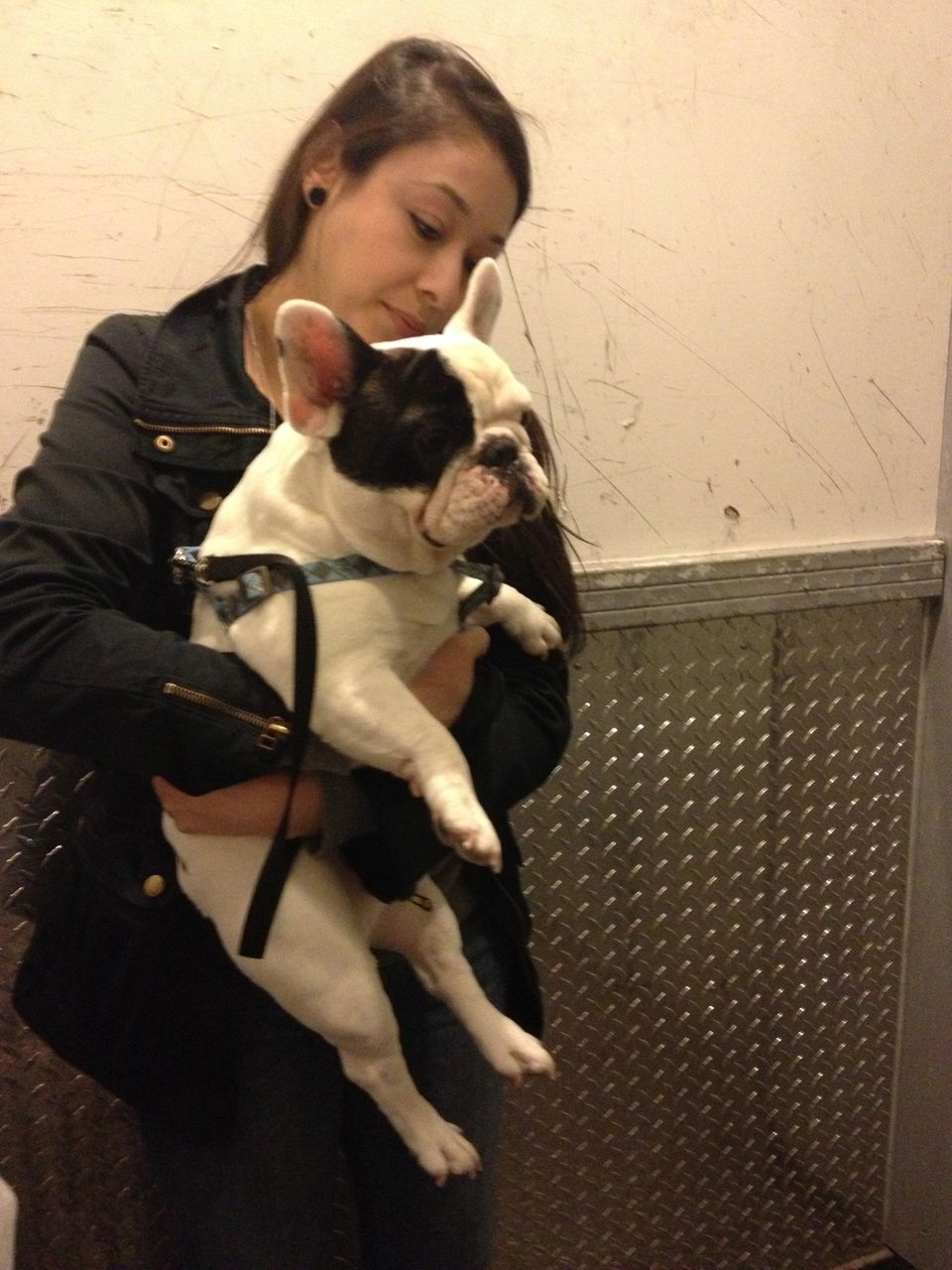 """Manny the Frenchie came to visit the AOL/Huffington Post headquarters in Chicago with his human """"parents."""""""