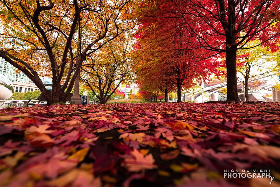 "The <a href=""http://www.flickr.com/photos/vexxed82/10692471294/in/set-72157637348343186/"" target=""_blank"">colors of fall in C"