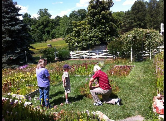 Maryland S Carnivorous Plant Nursery Hosts Botany