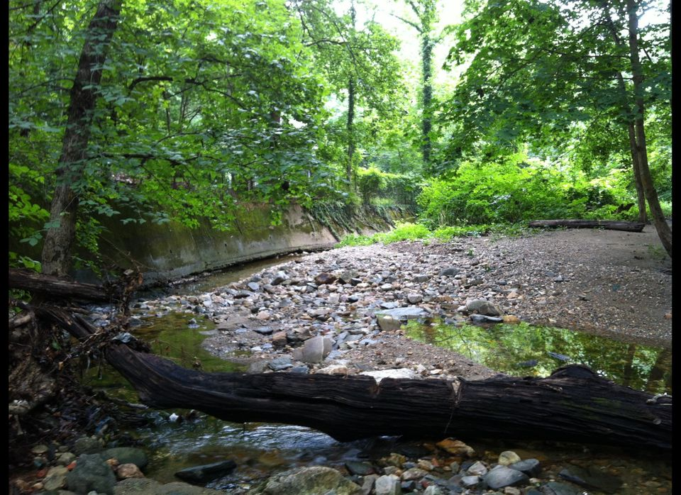 The Soapstone Valley tributary, right before it passes under Broad Branch Road.