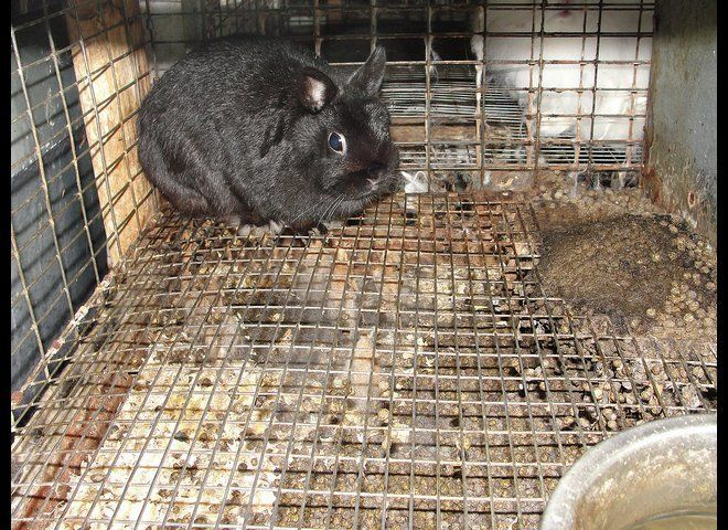 Photos taken at the scene of an animal cruelty call in July 2011. The animals were seized due to the conditions, following a