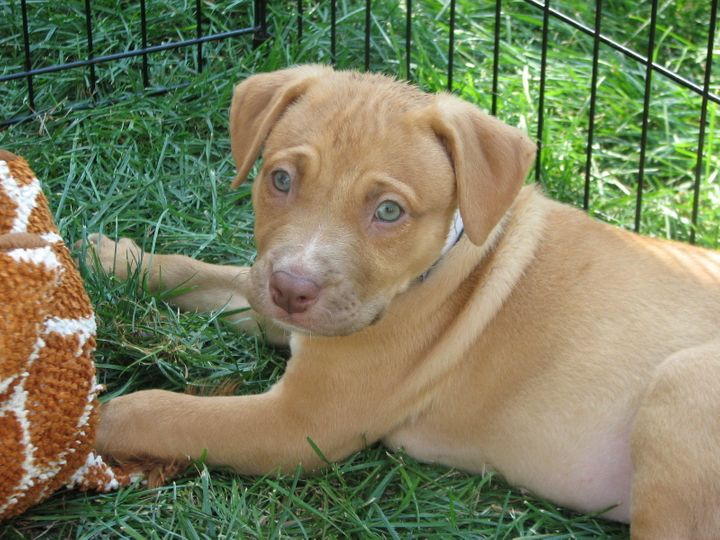 Lifeline Puppy Rescue Saves Unwanted Puppies From Euthanasia Every