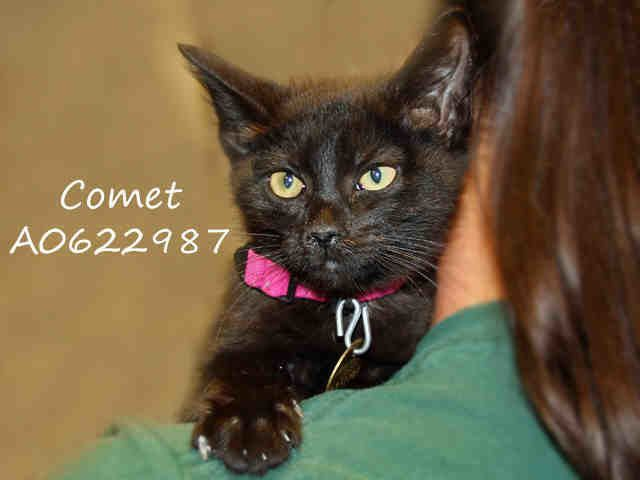 Adopt A Kitten From The Denver Dumb Friends League With A