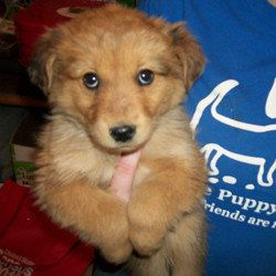 Lifeline Puppy Rescues Adoptable Pups This Week Photos Huffpost