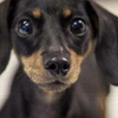 MaxFund Animal Adoption Center's Available Dogs This Week