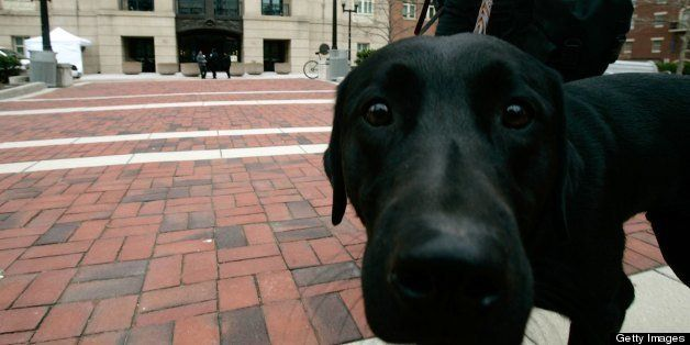 ALEXANDRIA, VA - MARCH 6:  Canine Miracle patrols with its handler, officer John Childs III, outside the federal courthouse w