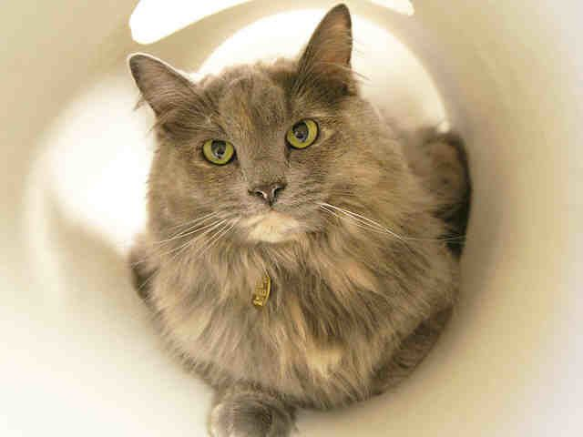 "Maggie is described as being a ""good cat who has learned a lot in the short time that (she) have been on this earth.""  She al"
