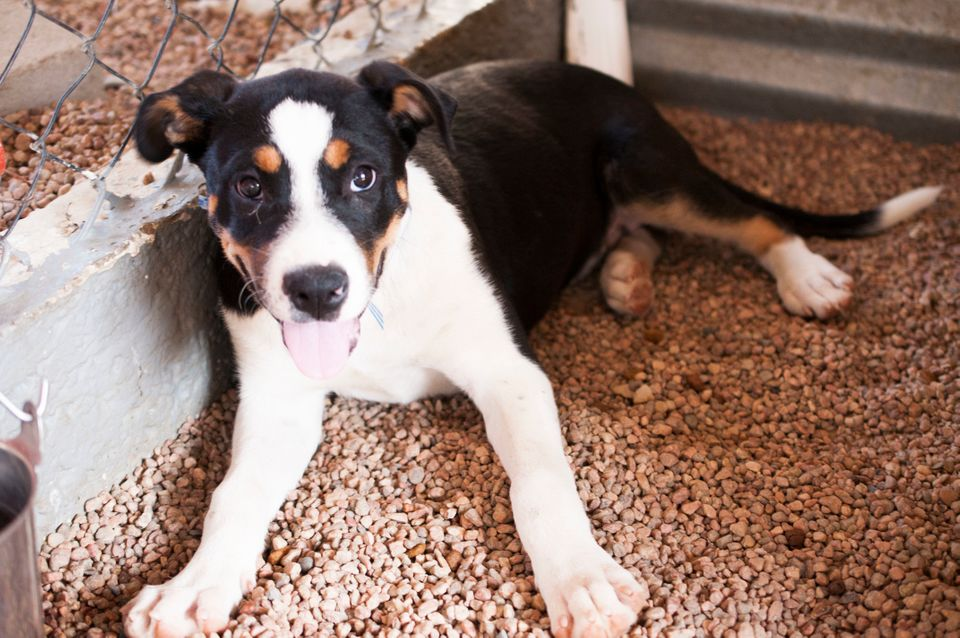 Brighton Puppy Rescue Inspired By Royal Baby George Adopt A Pup