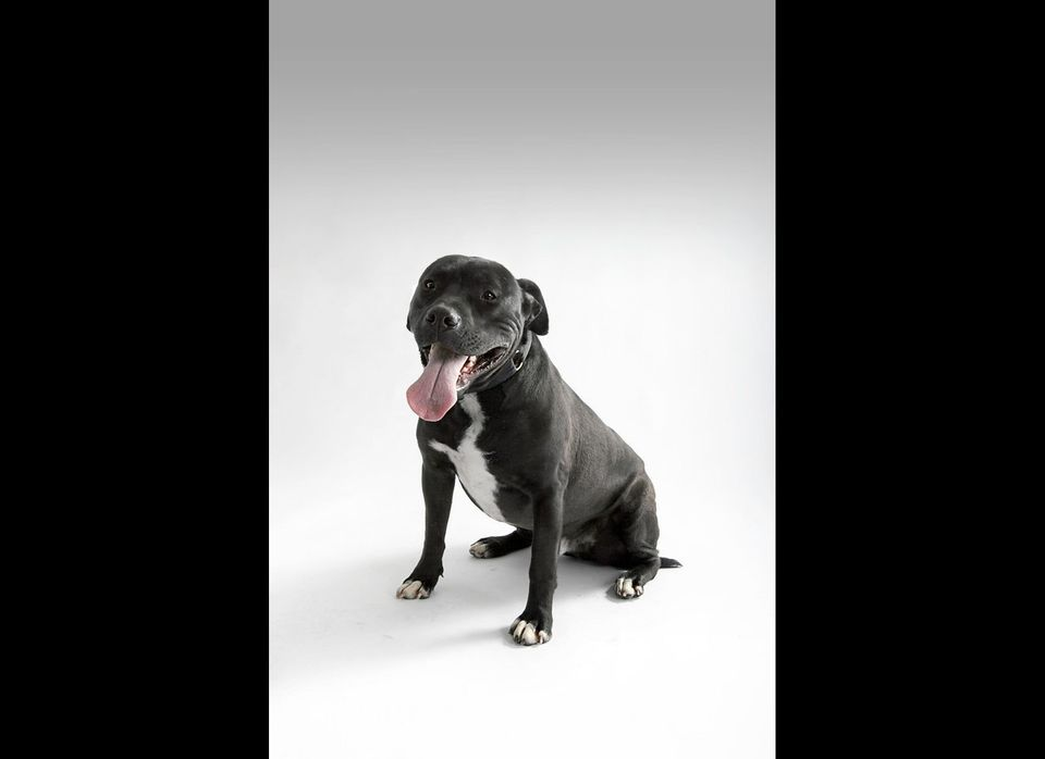 <strong>Beetlejuice (aka BB)</strong>