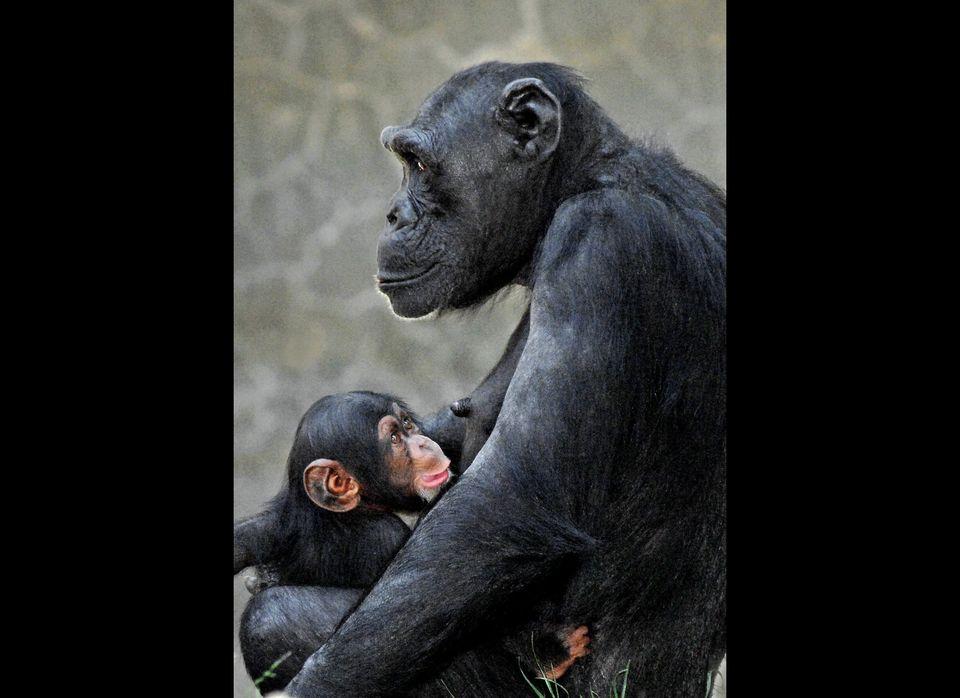 Photo courtesy of Los Angeles Zoo/Tad Motoyama.