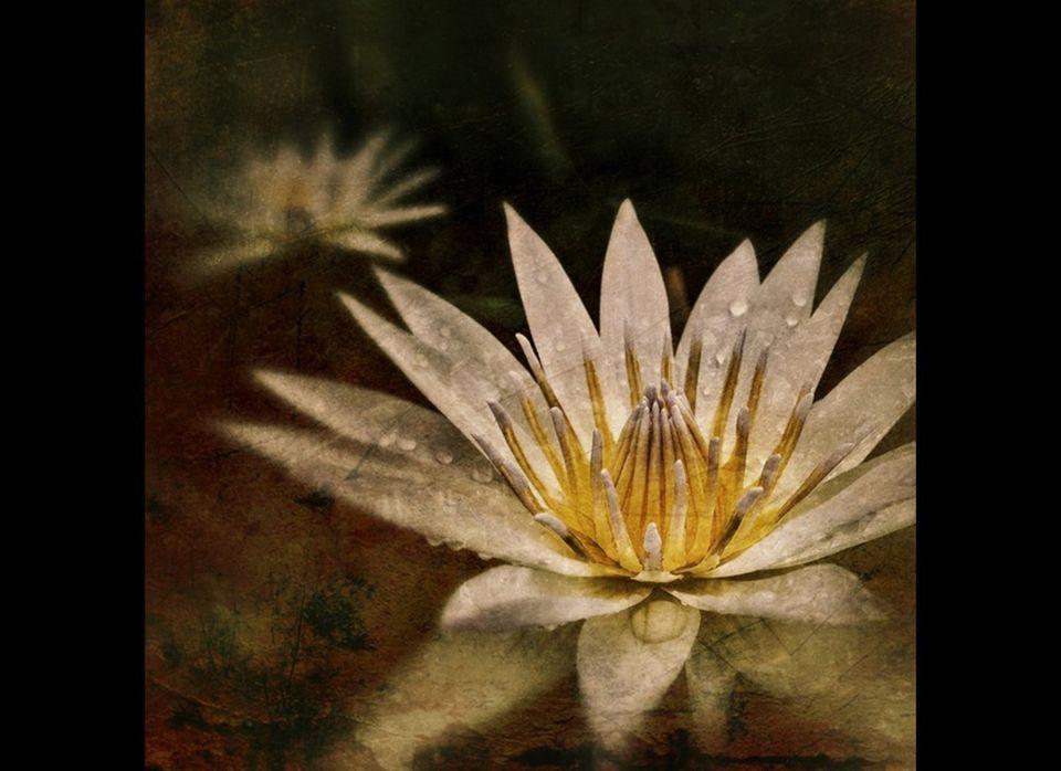 """Water Lily"" by Adria Ellis"