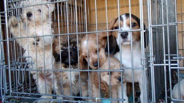 Online Puppy Mills: International Fund For Animal Welfare Report
