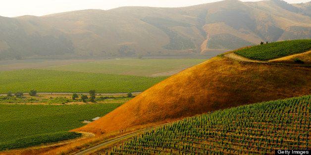 Vineyards near Santa Maria, California