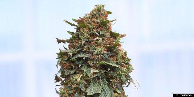closeup of pruned female...
