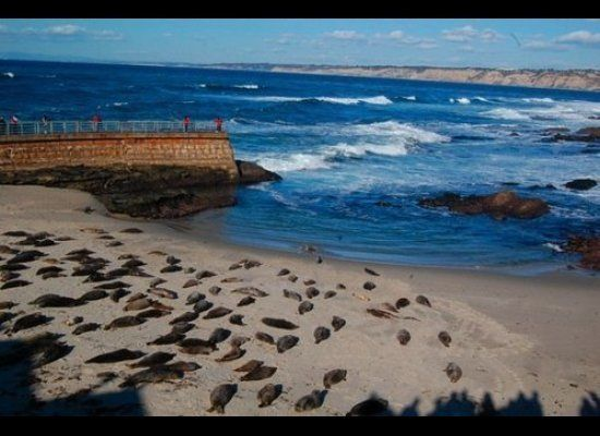 Like most of California, La Jolla's majestic view of the Pacific enchants any beach bum; but its biggest draw is not the shor