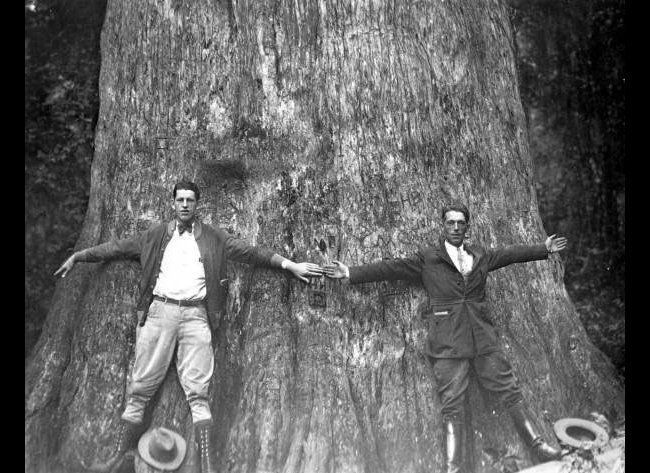In this 1920's photo from the Florida State Archives, two men stand together and spread their arms to give an indication of t