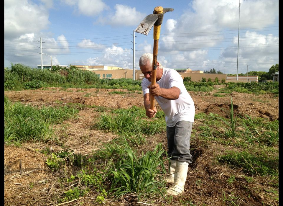 Juan Lopez, a resident at Verde Gardens, helps prepare the land to be planted with seasonal vegetables.