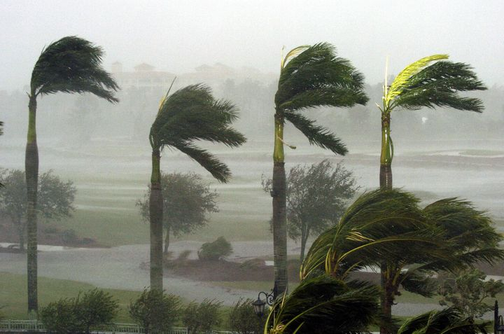 Naples, UNITED STATES:  Palm trees at a hotel bend in the fierce winds, 24 October, 2005, as Hurricane Wilma slams into Naple