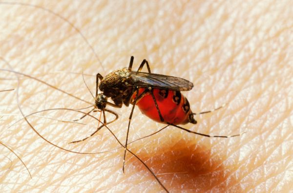 "More than <a href=""http://www.npr.org/blogs/health/2013/09/12/221791874/florida-officials-take-swat-at-mosquitoes-with-dengue"