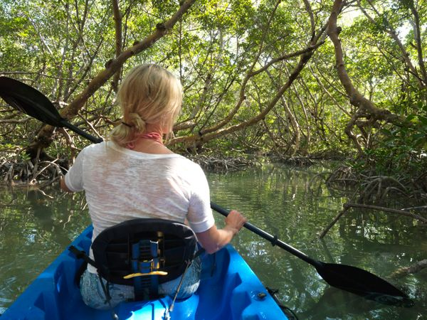 """Take your family and friends kayaking in <a href=""""http://www.floridastateparks.org/oletariver/"""" target=""""_blank"""">Oleta River S"""
