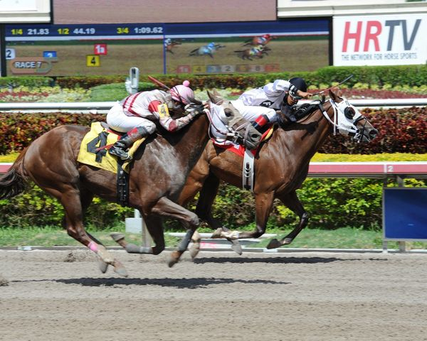 """Head up to Hallandale Beach for a day <a href=""""http://www.gulfstreampark.com/"""" target=""""_blank"""">at the racetrack</a>, where ev"""