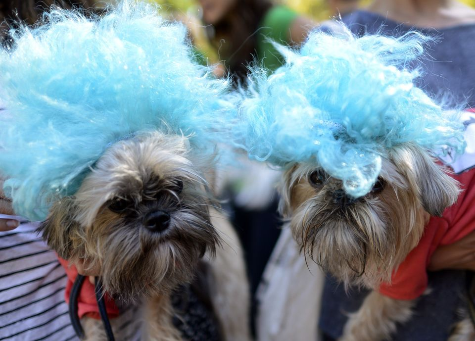 Dogs in matching wigs during the 22nd Annual Tompkins Square Halloween Dog Parade in New York on October 20, 2012. The parade